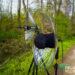 Wissen: Parabolspiegel-Mikrofone